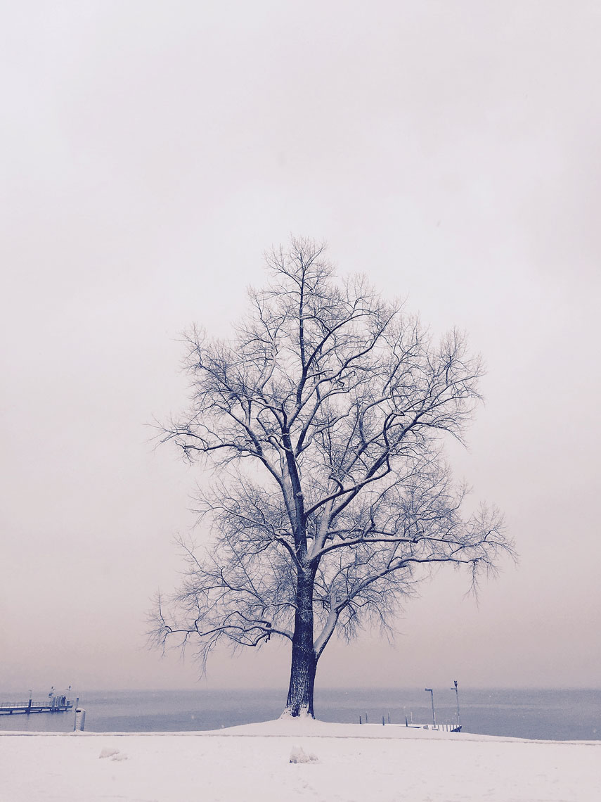 lake-zurich-tree-copy